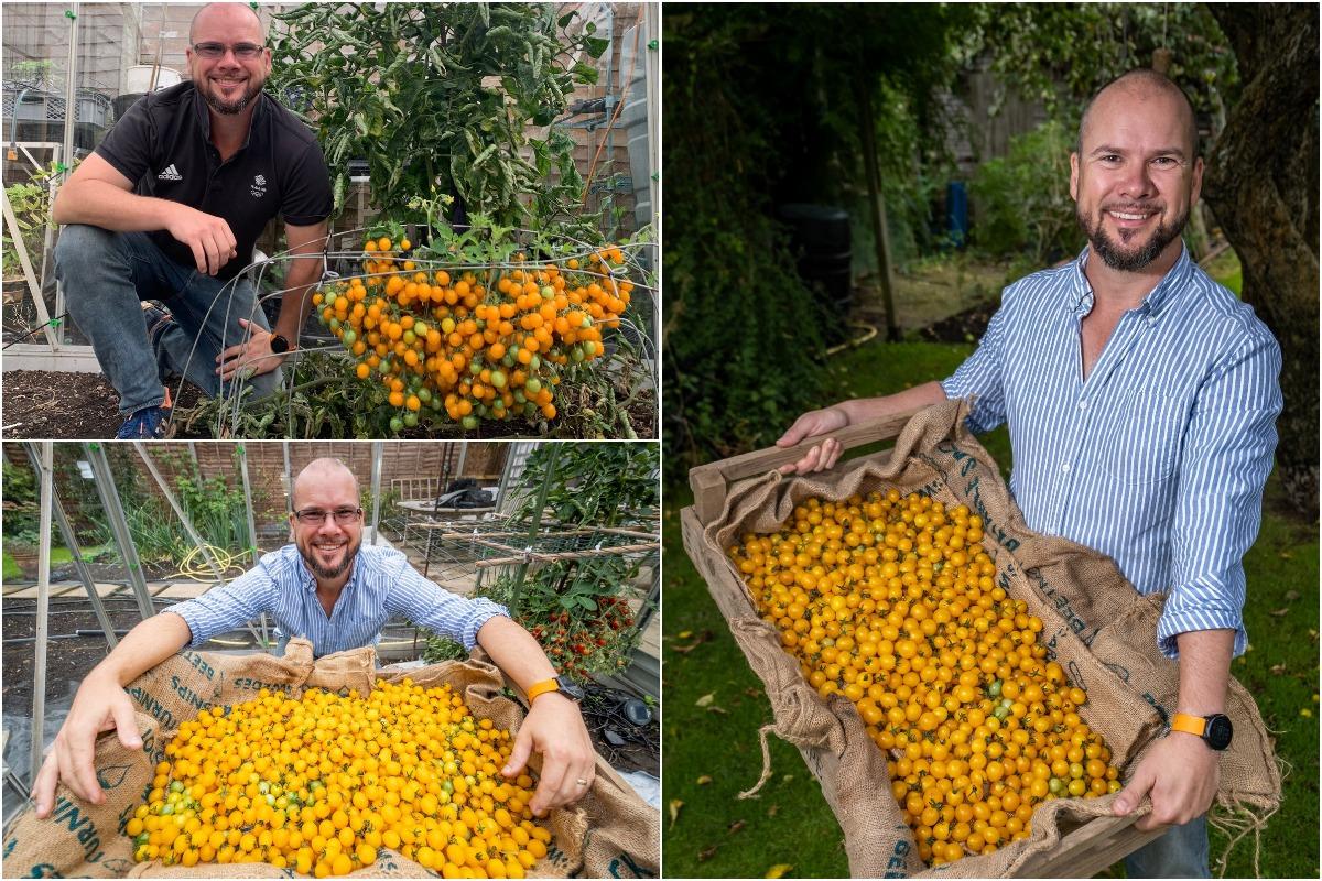 Садовод побил мировой рекорд, вырастив 839 помидоров на одном кусте