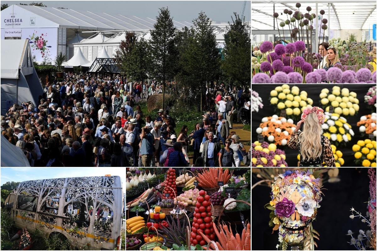 Chelsea Flower Show 2021: самый важный фестиваль садов и цветов в мире