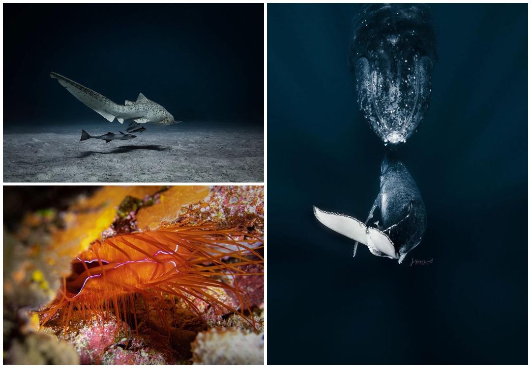 Замечательные подводные фотографии Жасмин Кэри