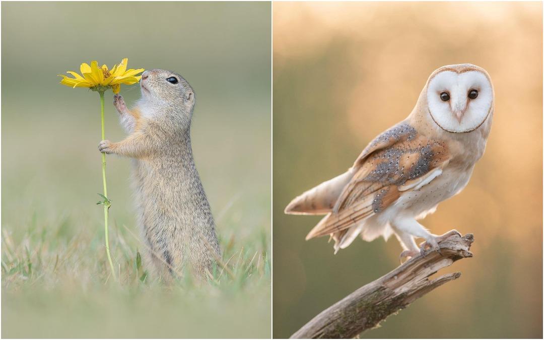 Симпатичные животные на фотографиях Дика Ван Дуйна