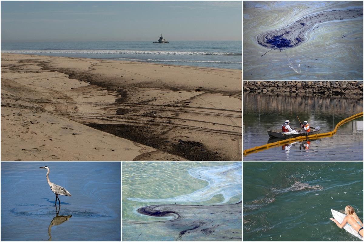 Разлив нефти в Калифорнии убивает рыбу и наносит непоправимый ущерб водно-болотным угодьям