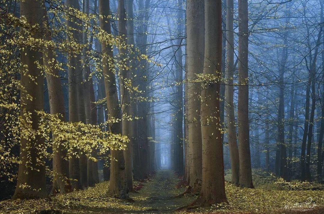 Лес на сказочных снимках Мартина Подта