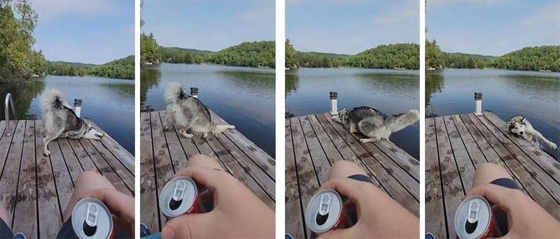 Забавное видео: пёс случайно упал в воду