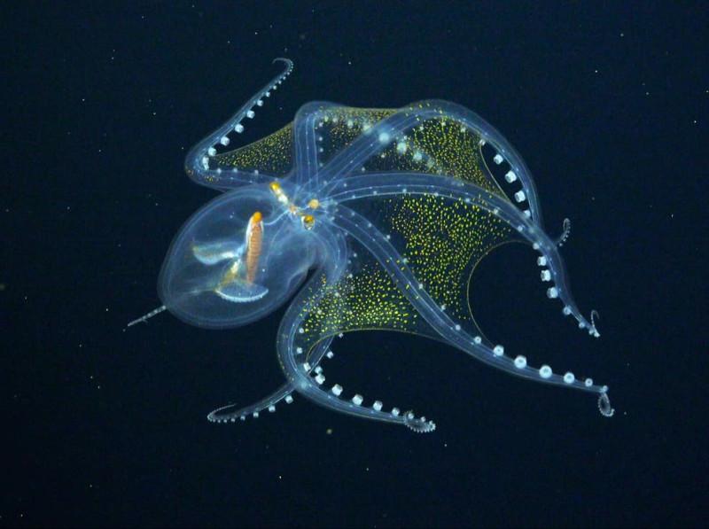 Фото: Schmitd Ocean Institute