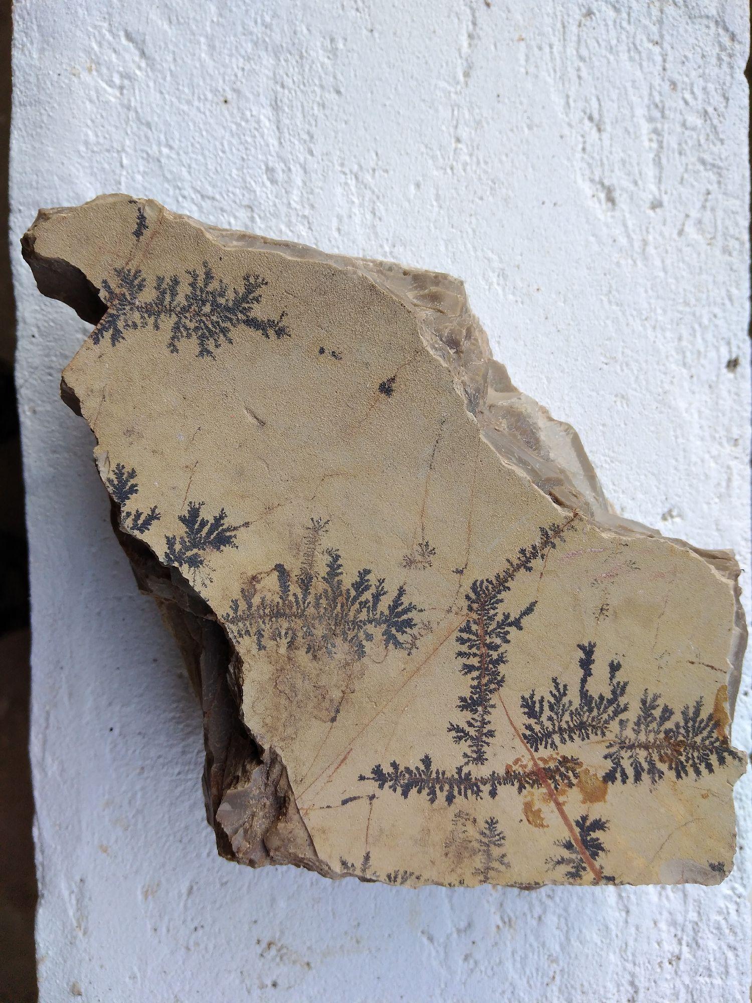 Камен и фосили