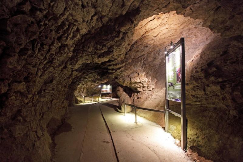 Пећина и пећински лав. Извор Народни музеј Аранђеловац.