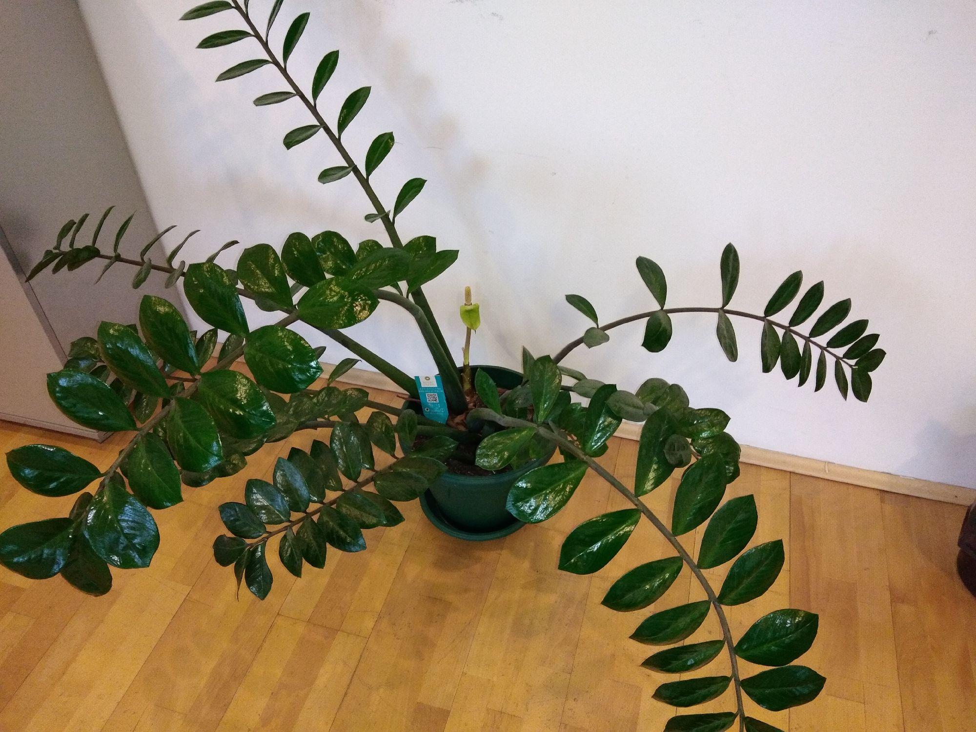Овој биљки је потребна нова саксија / Этому растению нужен новый горшок