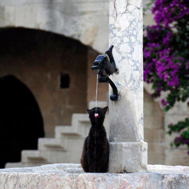 Кошка, пьющая из фонтана