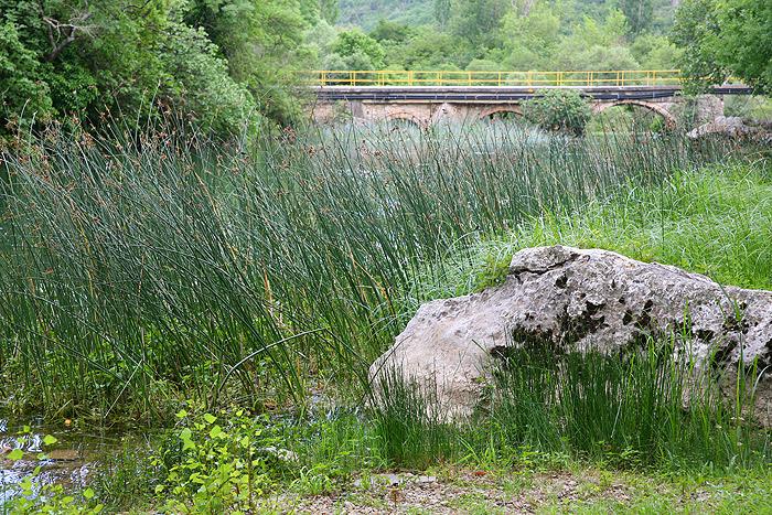 Камень, с которого Карин Дор, Лекс Баркер и Пьер Брис ловили рыбу в перерывах между съемками