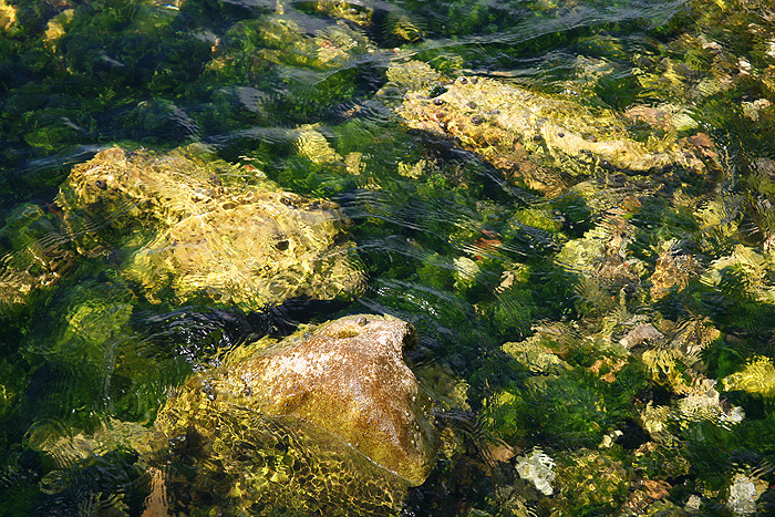 Каменистое дно Адриатического моря