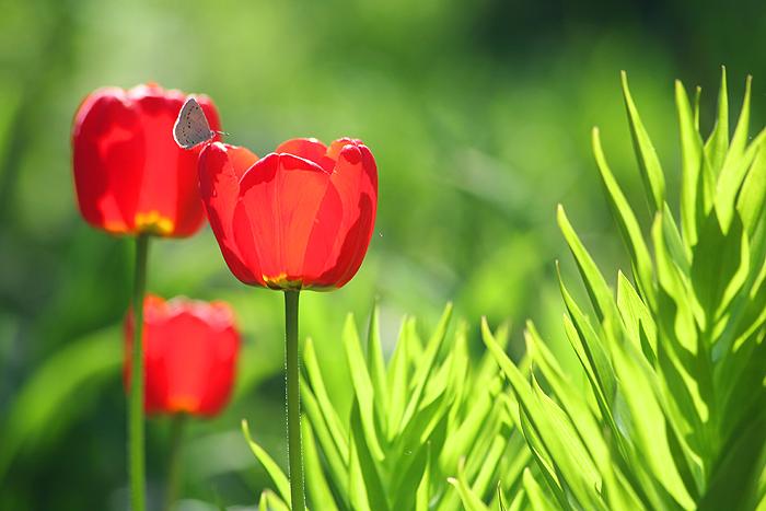 Краски весны