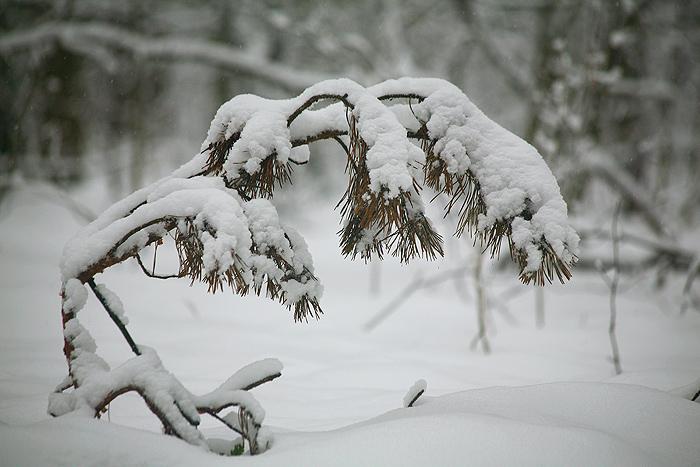 В дебрях зимнего леса