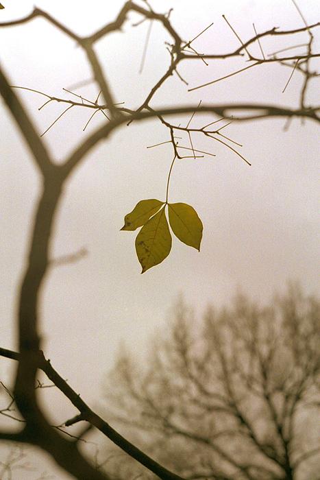 Фото-хокку про осень