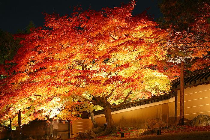 Красный клен в саду Кодай-дзи, Киото