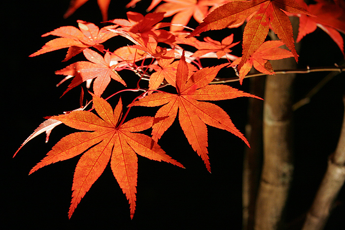 Красные клены в саду храма Эйкан-до, Киото