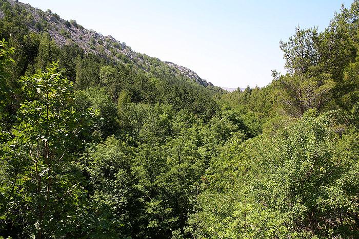 Заросшее ущелье Большая Пакленица (Velika Paklenica)