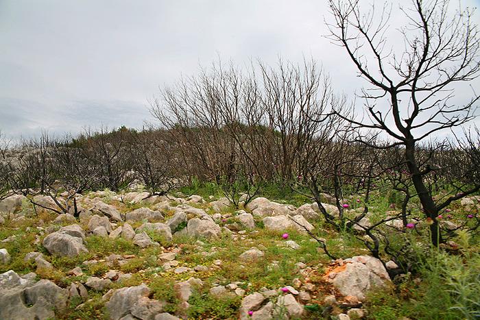 Склоны Велебита после пожара