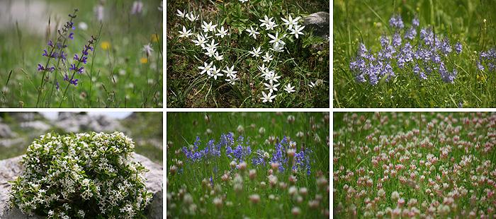 Велебитская флора