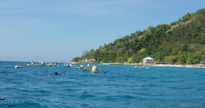 Tan Awan: снорклинг с китовыми акулами