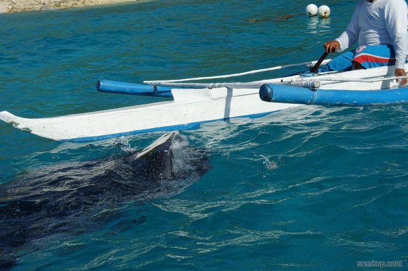 Whale-Shark-watching_01