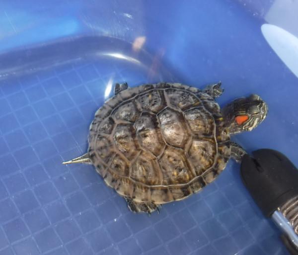 Turtle-02