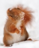 katsquirrel