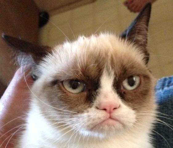 Grumpy_Cat-2-
