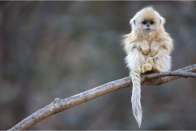 фото красивые обезьяны