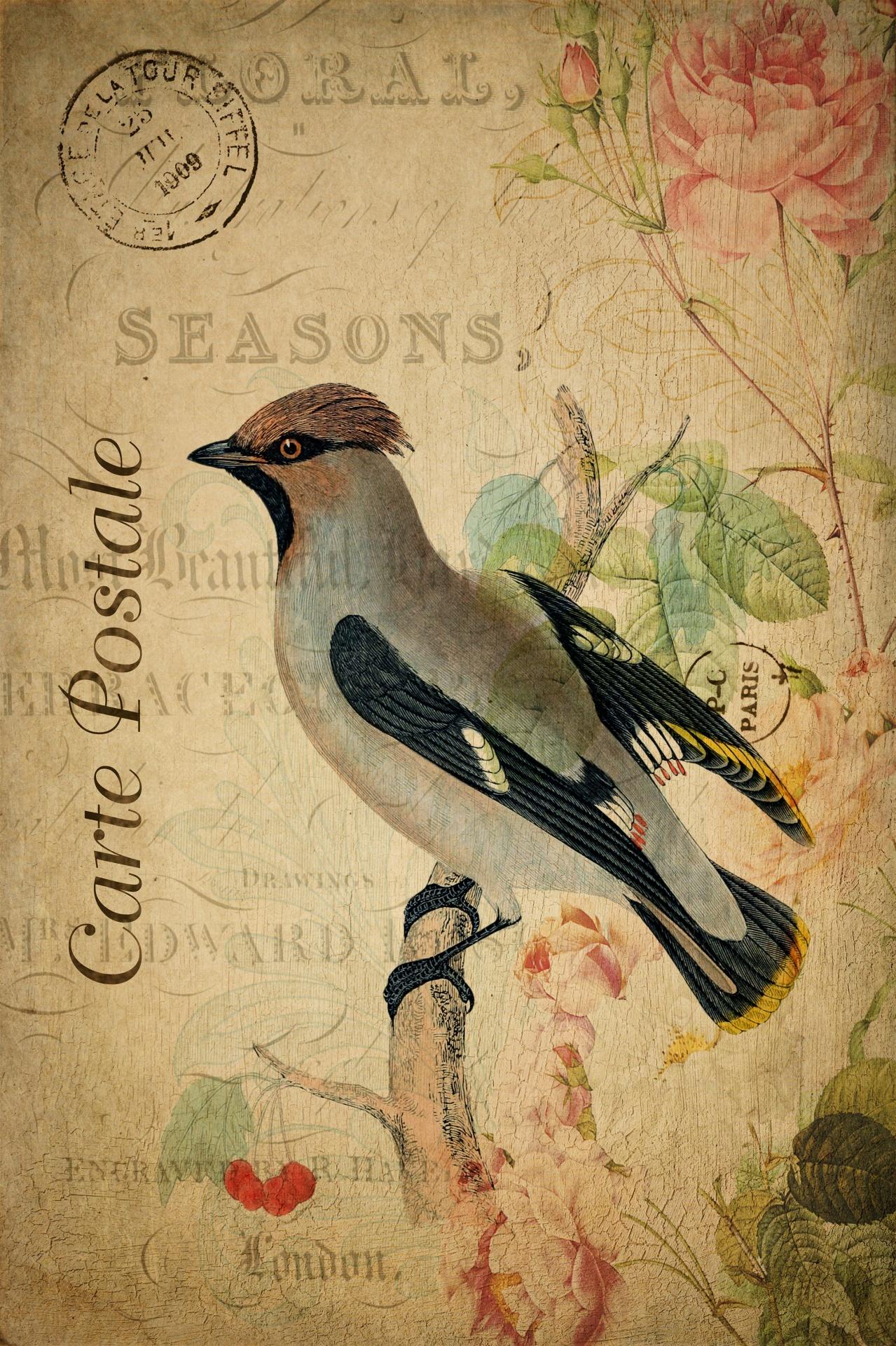 Французская открытка (1909)