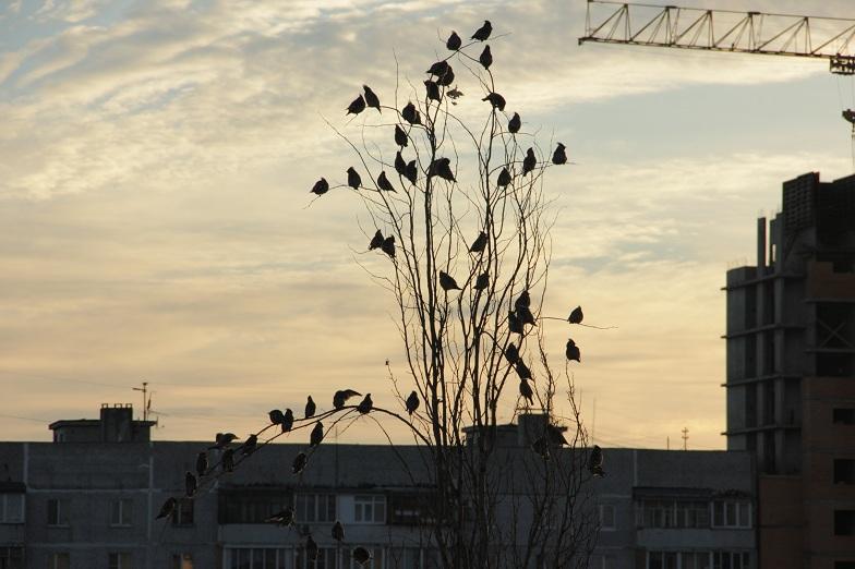 птицы, дерево, город
