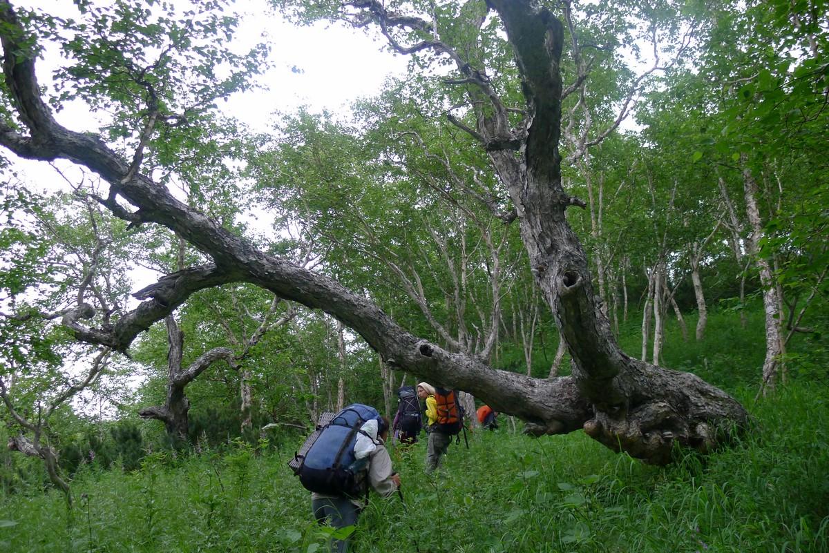 Где-то глубоко в лесах, Камчатка