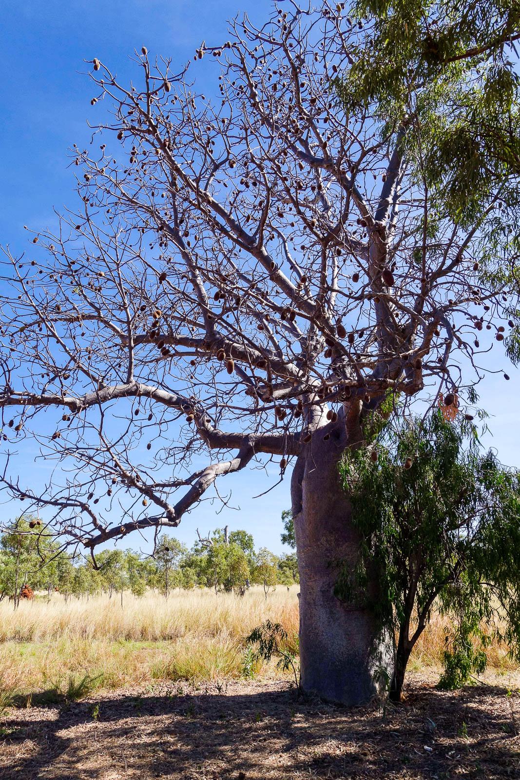 kimberley-australia-14