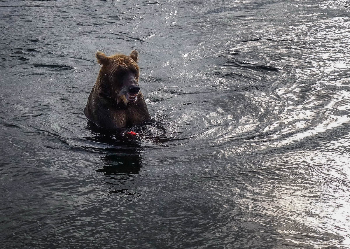 kamchatka-bears-2