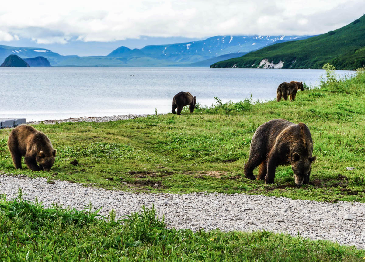 kamchatka-bears-3