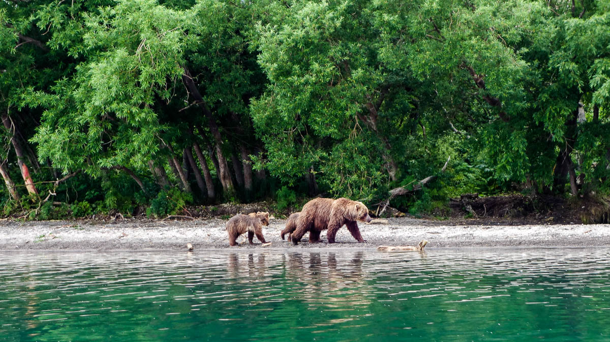 kamchatka-bears-7