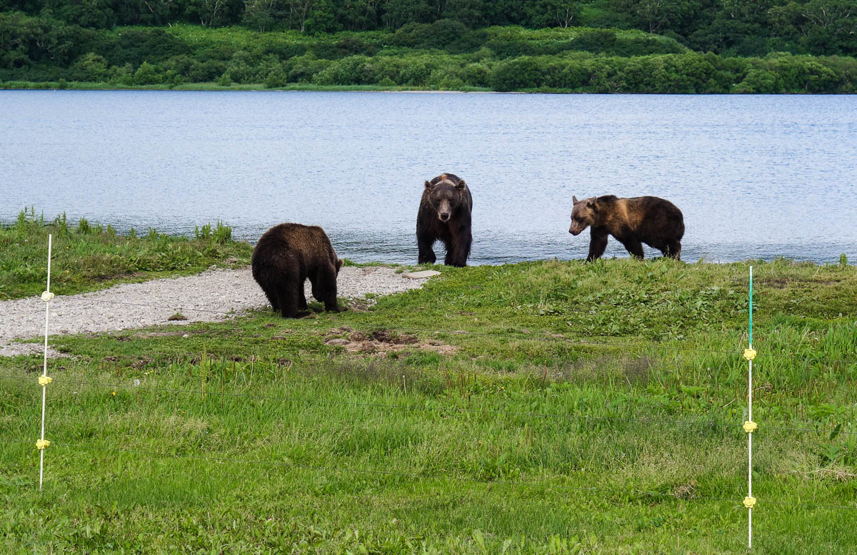 kamchatka-bears-31