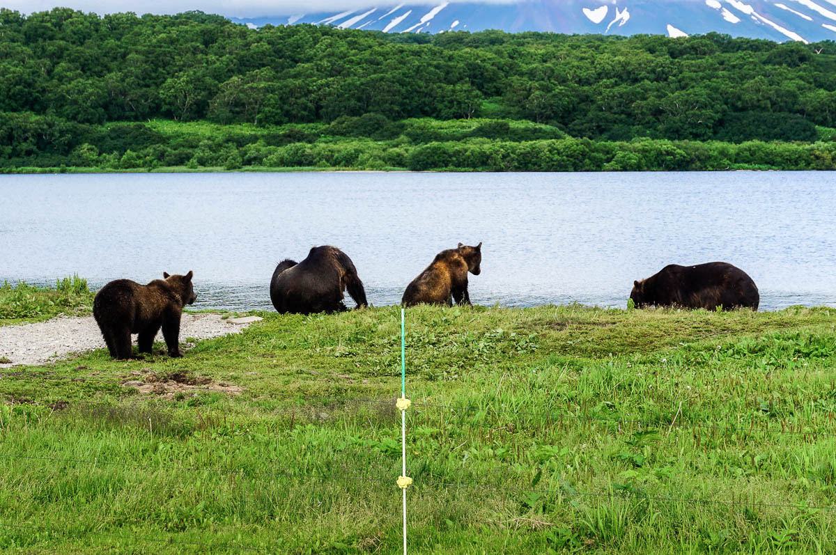 kamchatka-bears-32