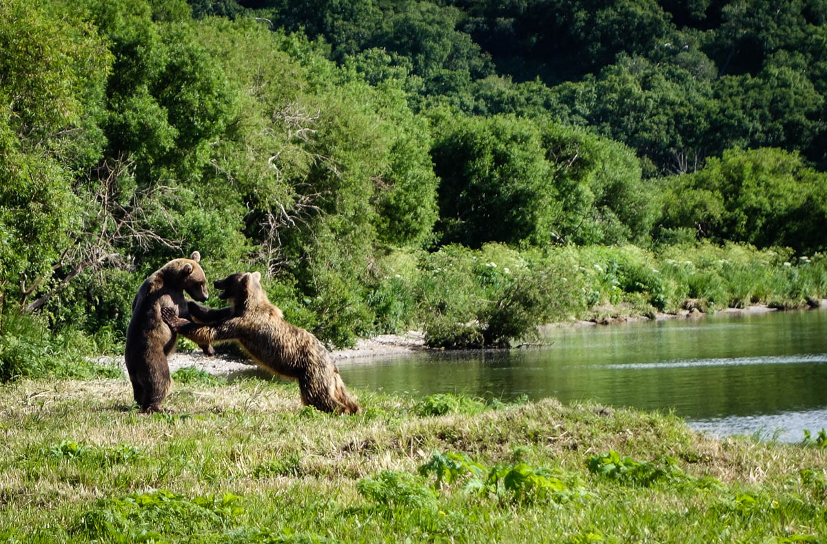 kamchatka-bears-35