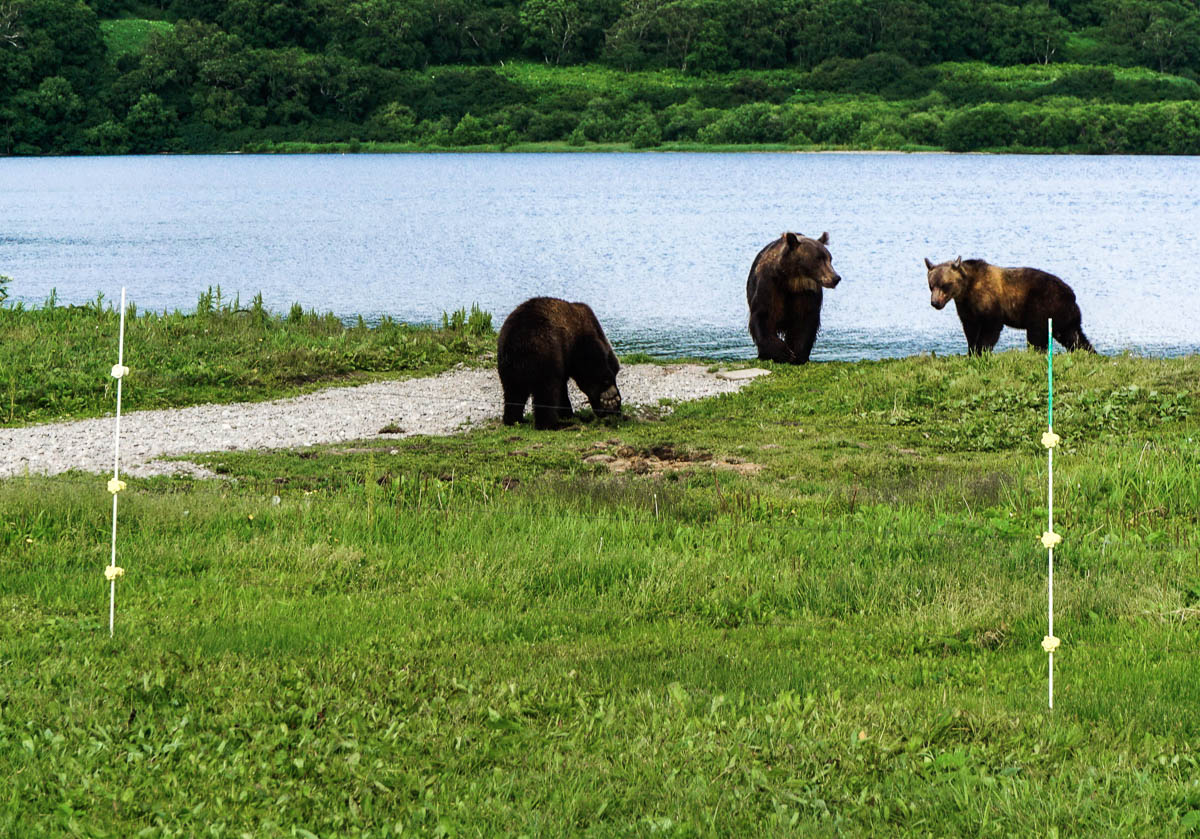 kamchatka-bears-44