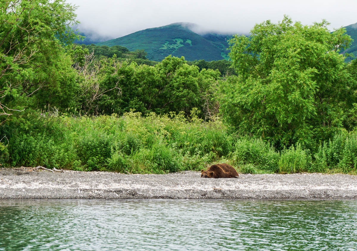 kamchatka-bears-51