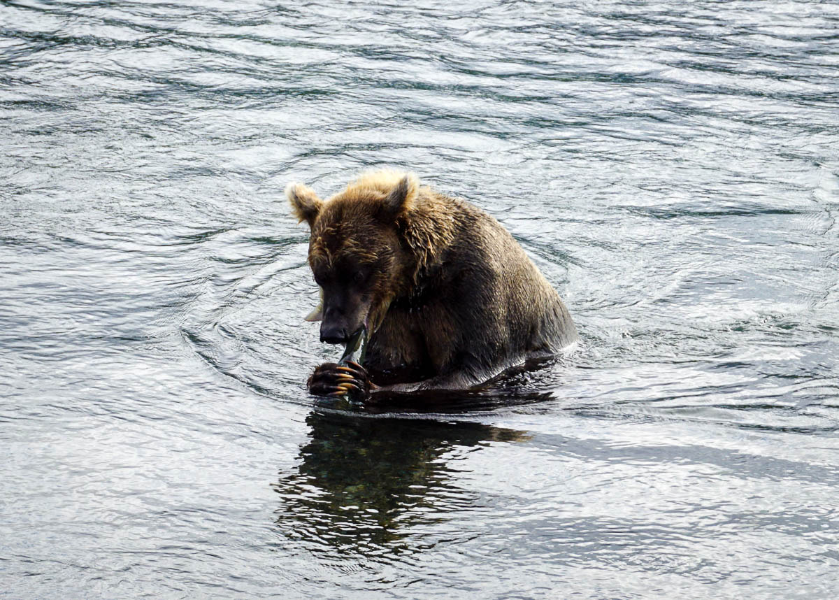 kamchatka-bears-54