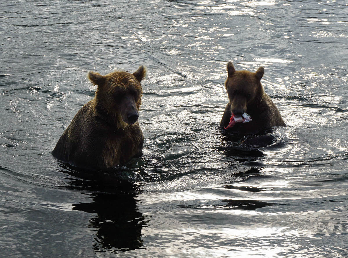 kamchatka-bears-59