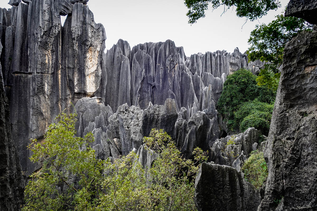 china-shilin-stone-forest-12