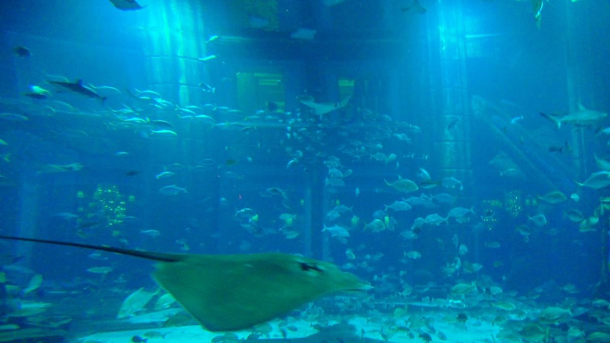fish0303