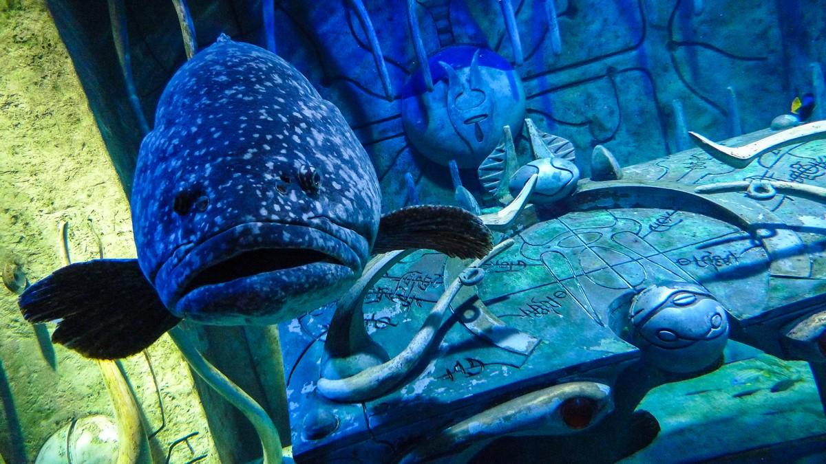 fish0306