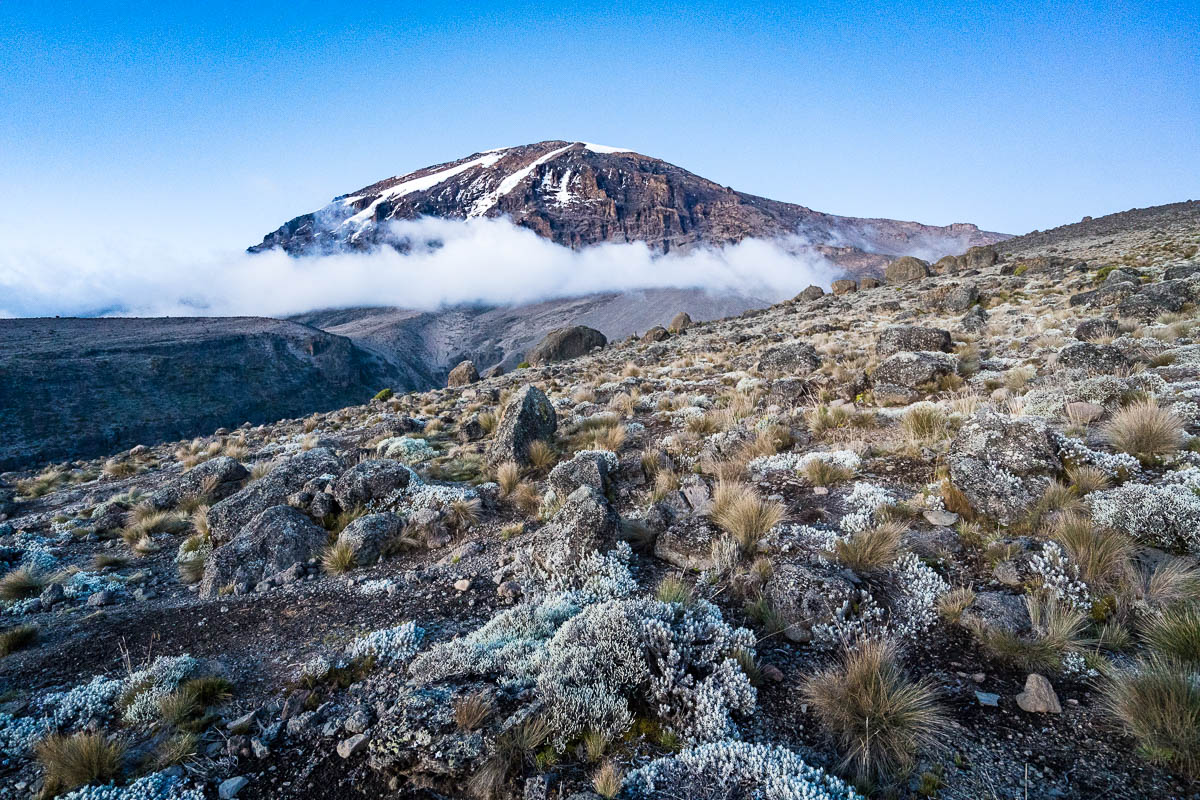 kilimanjaro-up-2