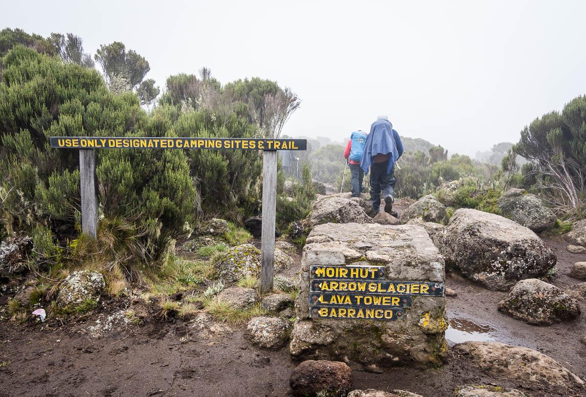 kilimanjaro-up-12