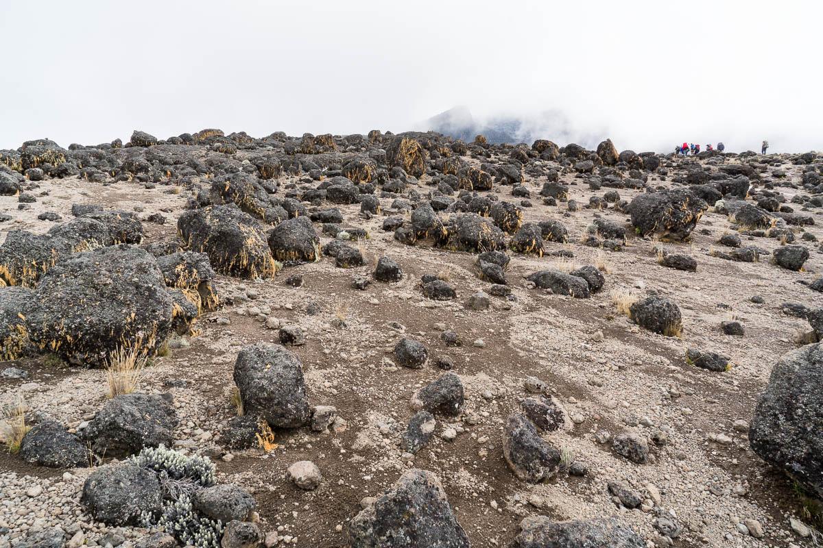 kilimanjaro-gogogo-22