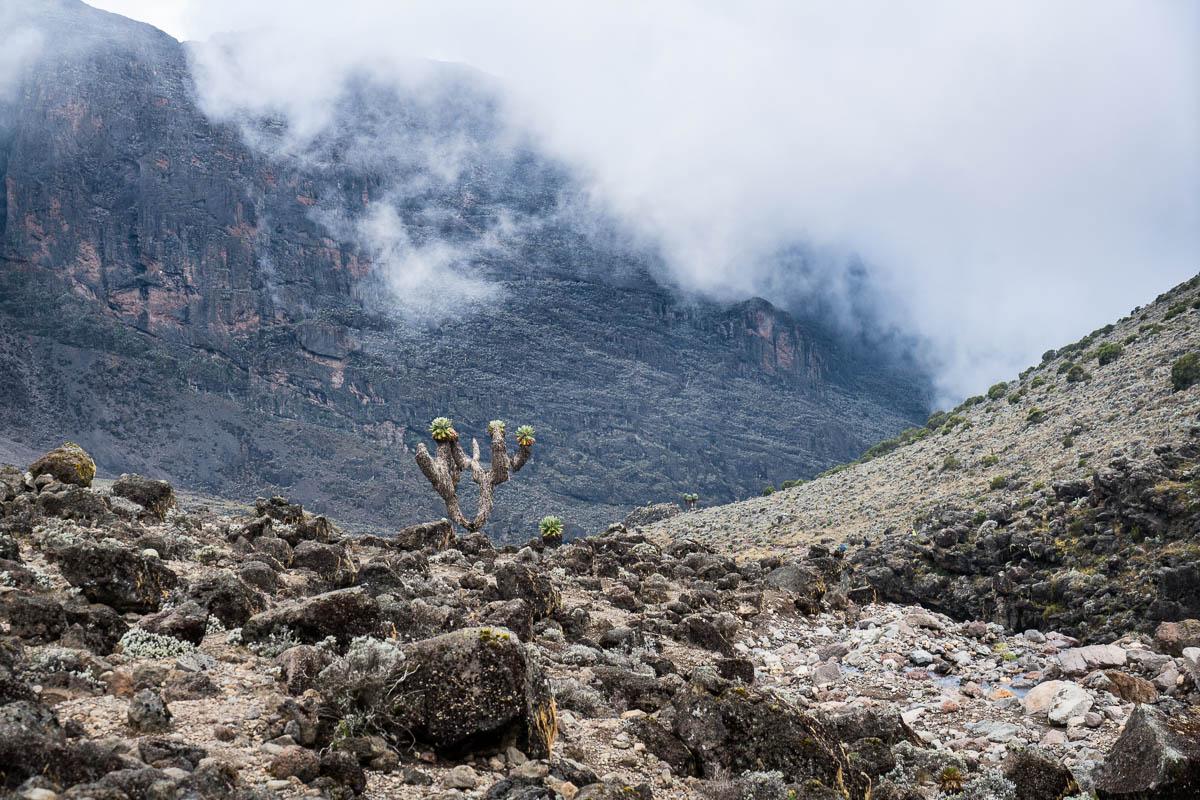 kilimanjaro-gogogo-25