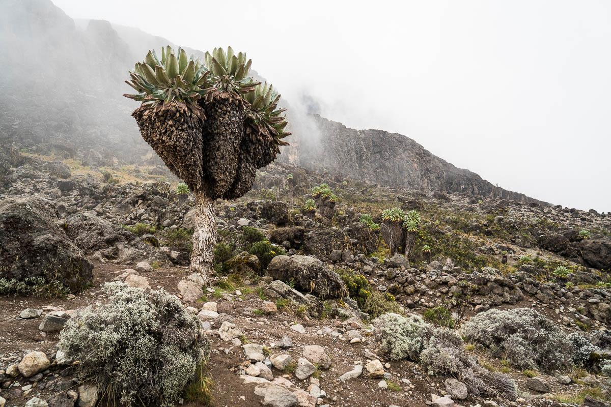 kilimanjaro-gogogo-26